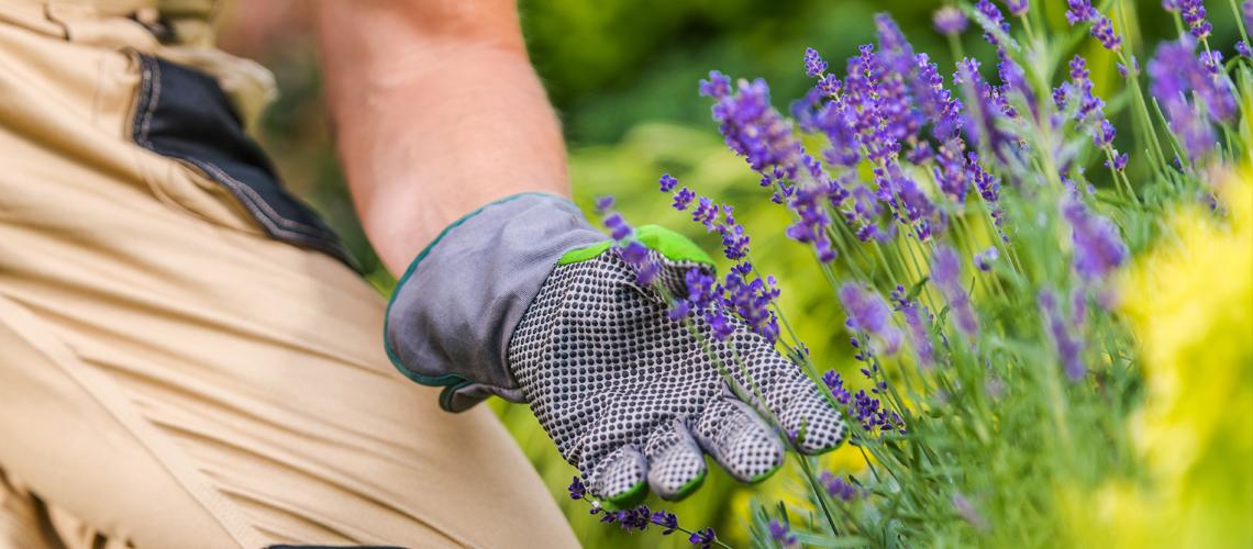 Los mejores consejos para cuidar tus plantas y jardín