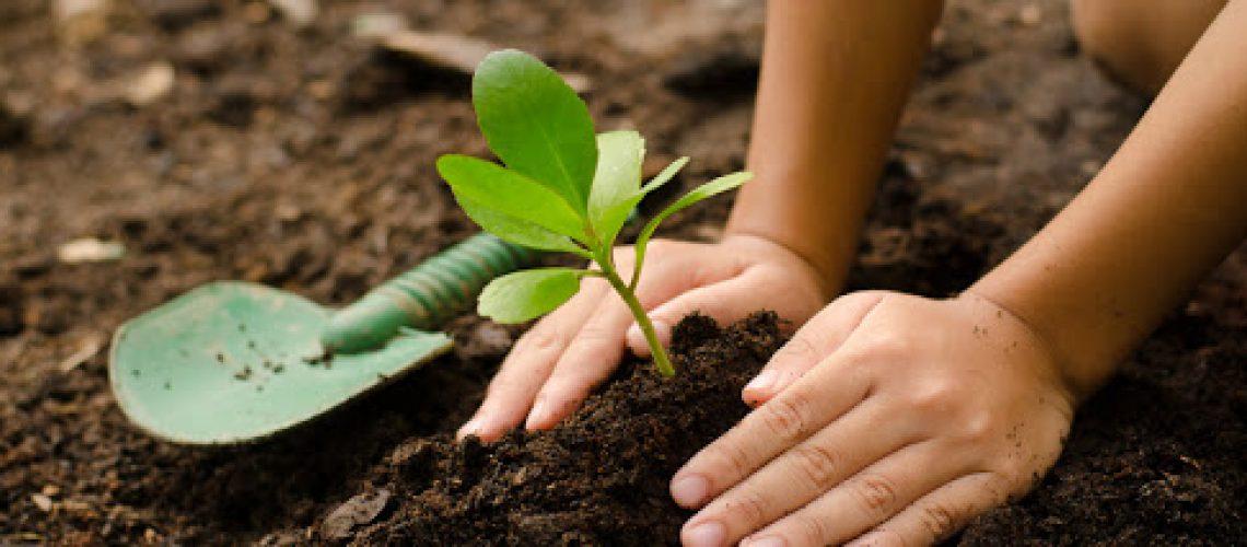 ¿Qué tipo de herramientas necesitas para el cuidado de tu jardín?