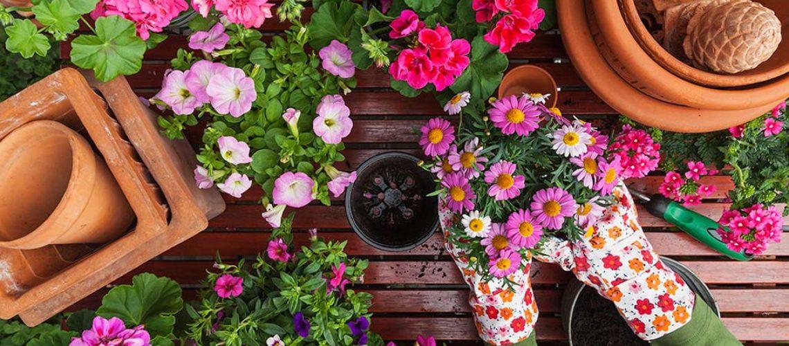 Sabías que la jardinería ayuda a mejorar tu salud mental