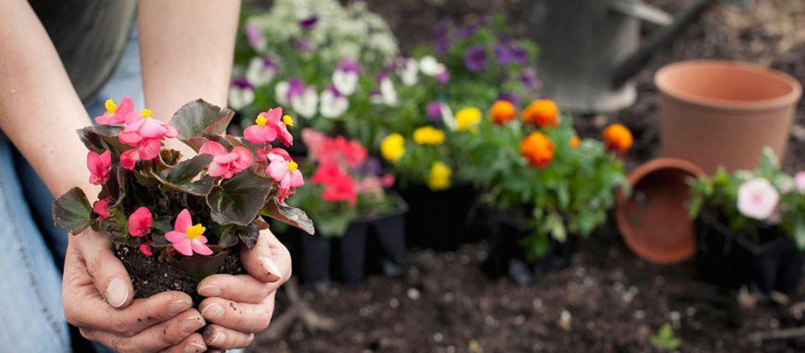 Cómo cuidar tus plantas tras el verano