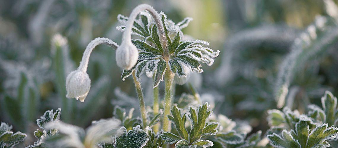 top-5-plantas-de-invierno